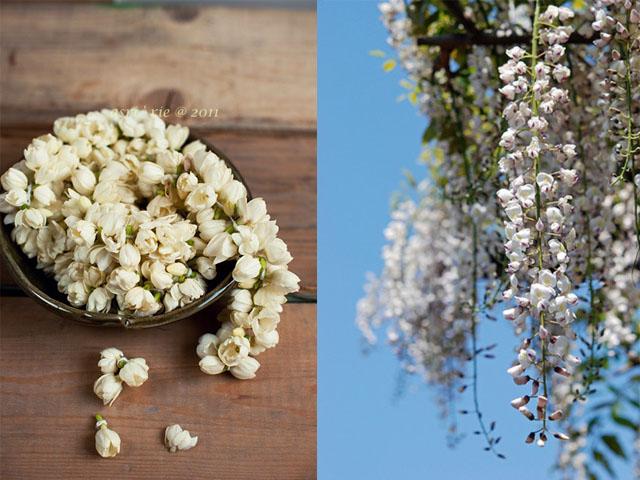 jasmine and wisteria1