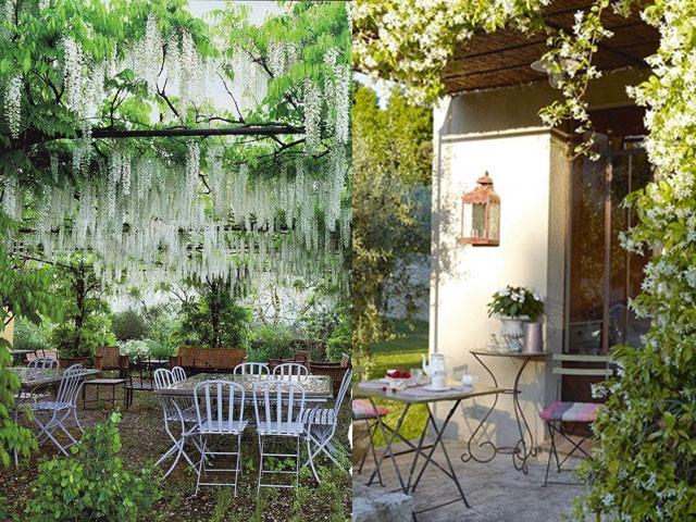 jasmine and wisteria3