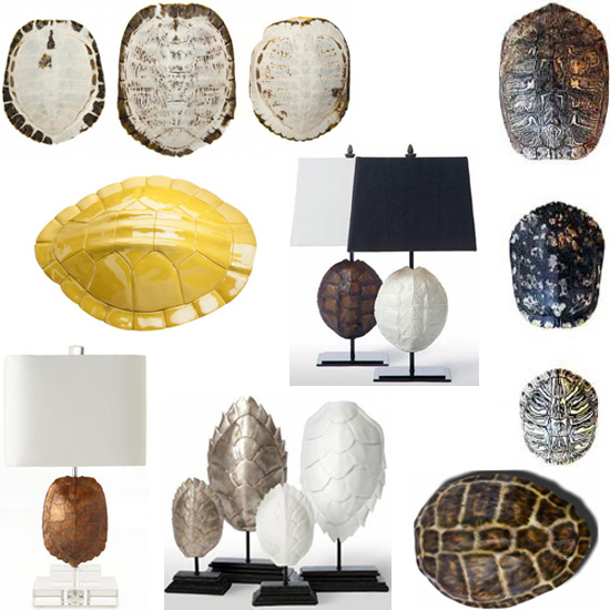 interior design turtle shell sourcing