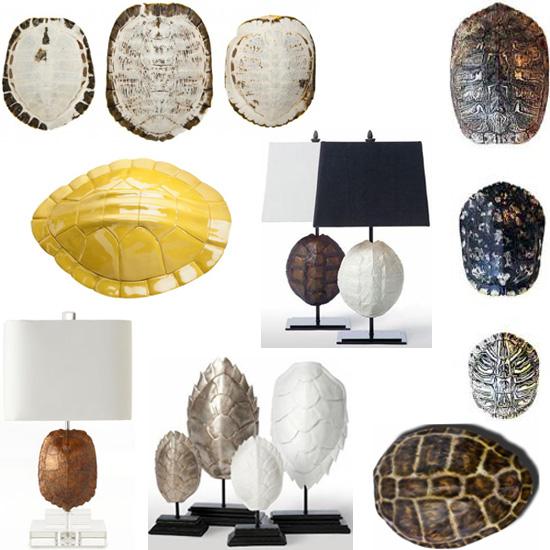she sells sea turtle shells part 2 caribbean living blog. Black Bedroom Furniture Sets. Home Design Ideas