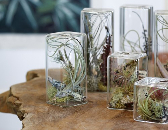 Air plants interior design caribbean living blog for House decoration stuff