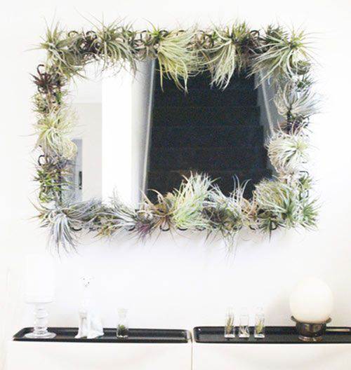 air plant interior design5