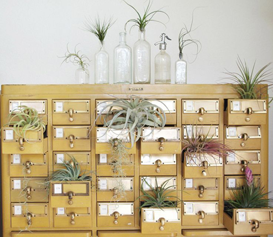 air plant interior design7