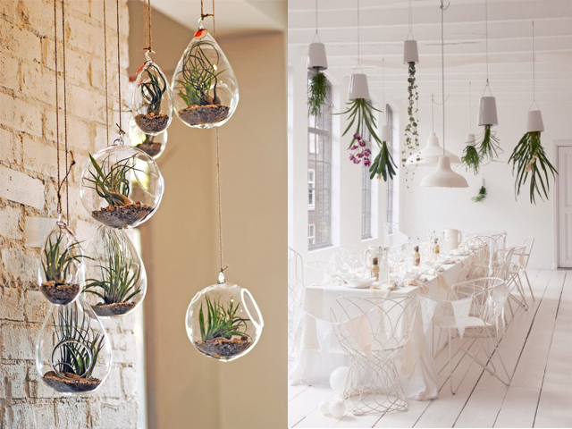 air plants interior design4
