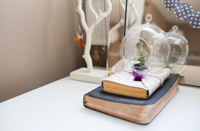 air plants interior design5.5