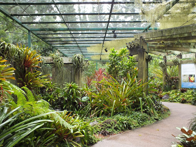 mcneice bromeliad collection2